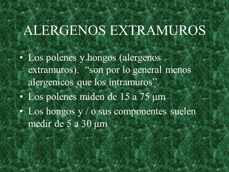 ALERGENOS EXTRAMUROS Los polenes y hongos (alergenos extramuros). son por lo general menos alergenicos que los intramuros .