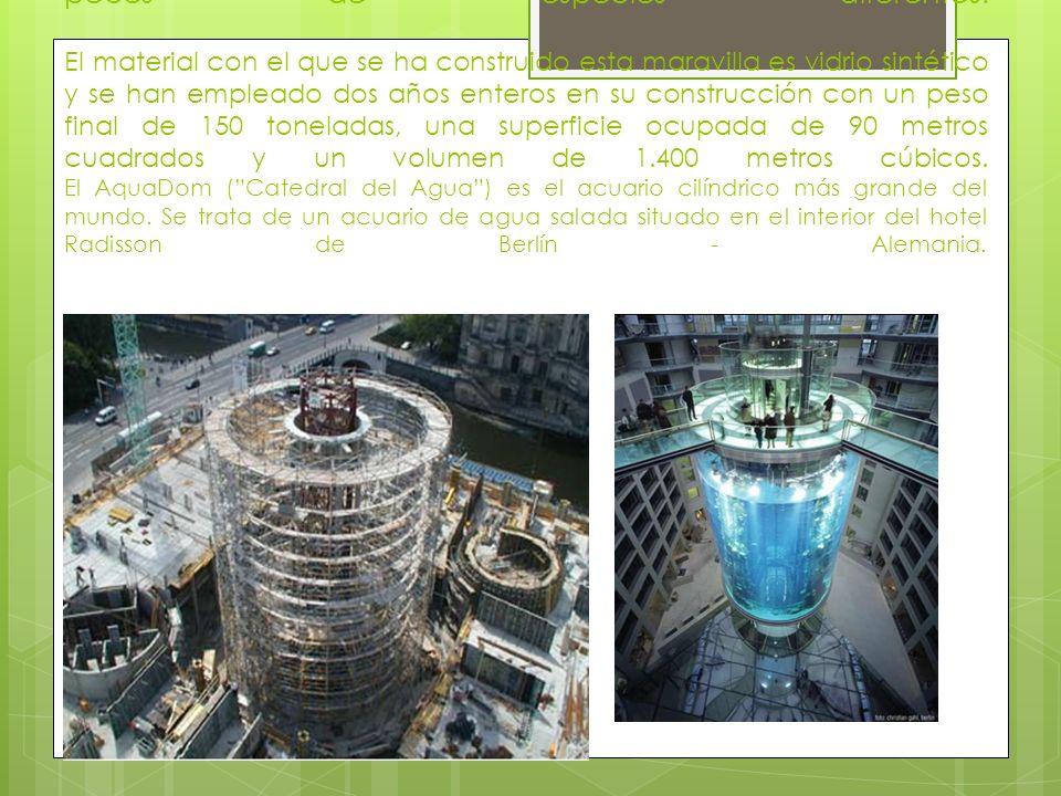 El cilindro mide 25 metros de alto y 11 metros de diámetro