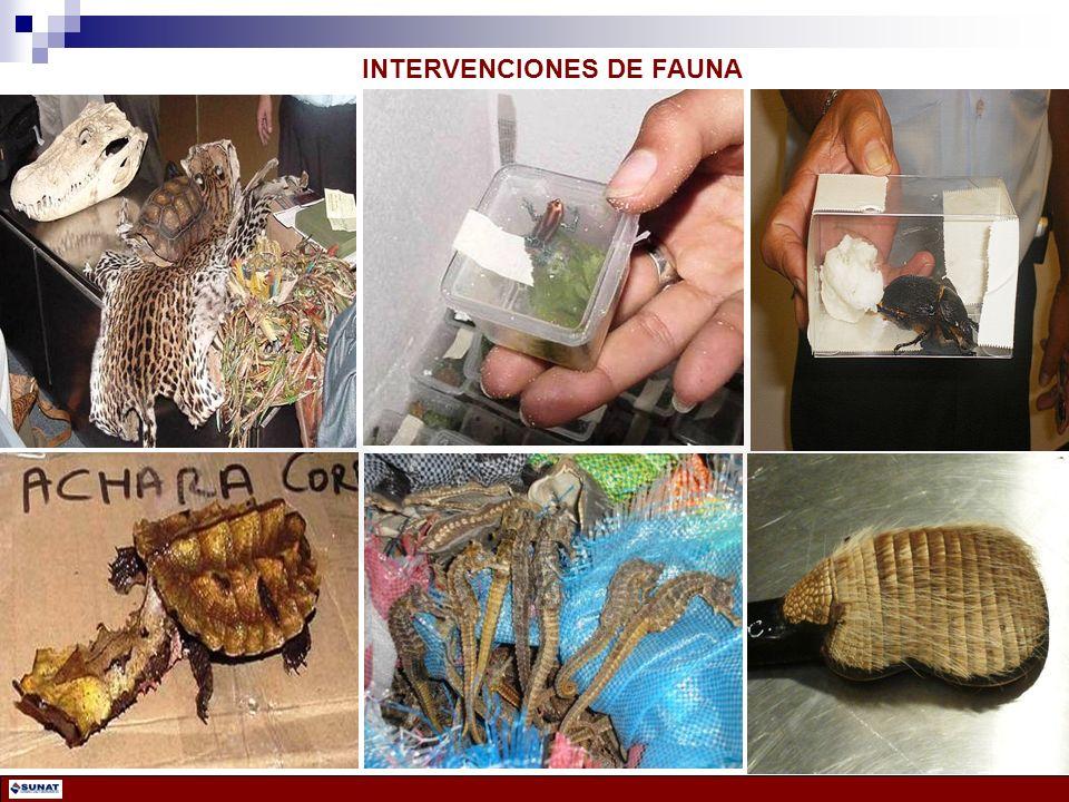 INTERVENCIONES DE FAUNA