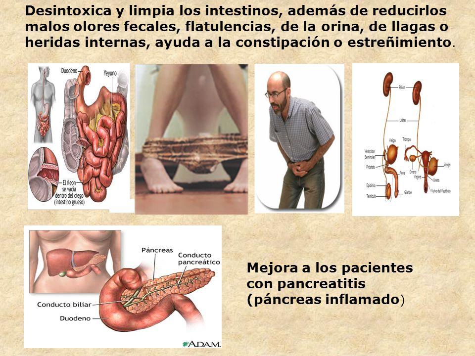 Desintoxica y limpia los intestinos, además de reducirlos malos olores fecales, flatulencias, de la orina, de llagas o heridas internas, ayuda a la constipación o estreñimiento.
