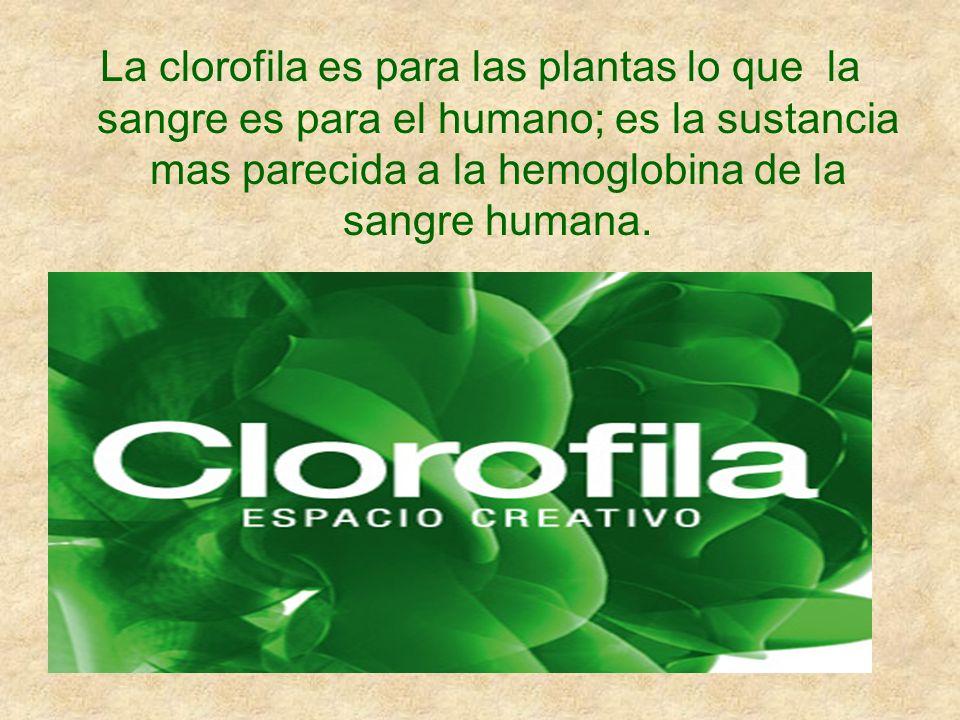 La clorofila es para las plantas lo que la sangre es para el humano; es la sustancia mas parecida a la hemoglobina de la sangre humana.