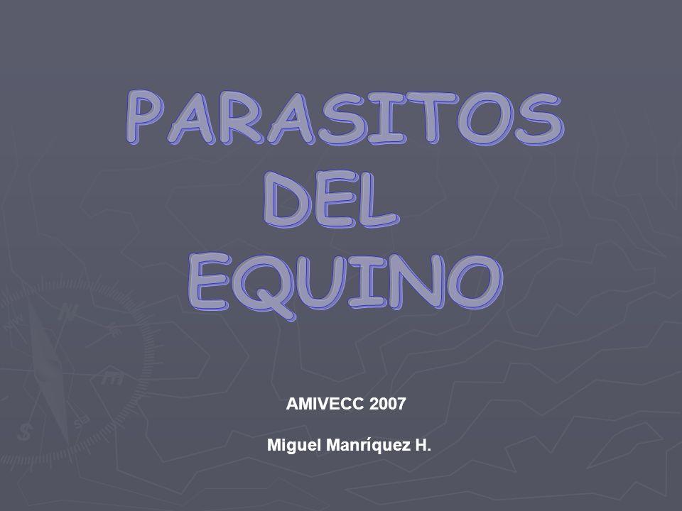 PARASITOS DEL EQUINO AMIVECC 2007 Miguel Manríquez H.