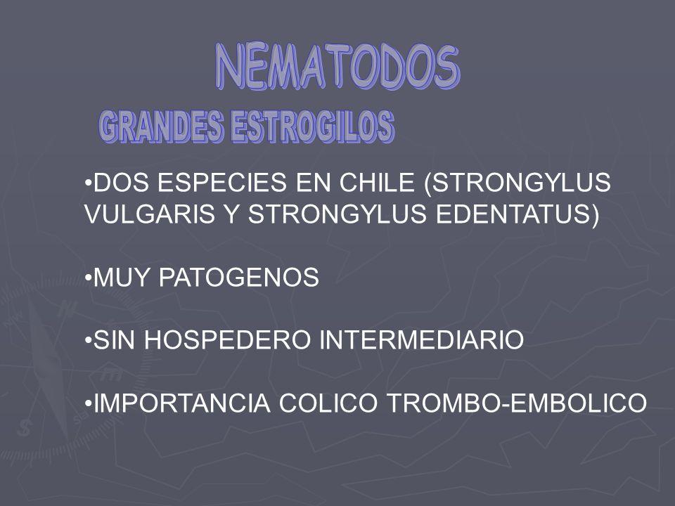 NEMATODOS DOS ESPECIES EN CHILE (STRONGYLUS