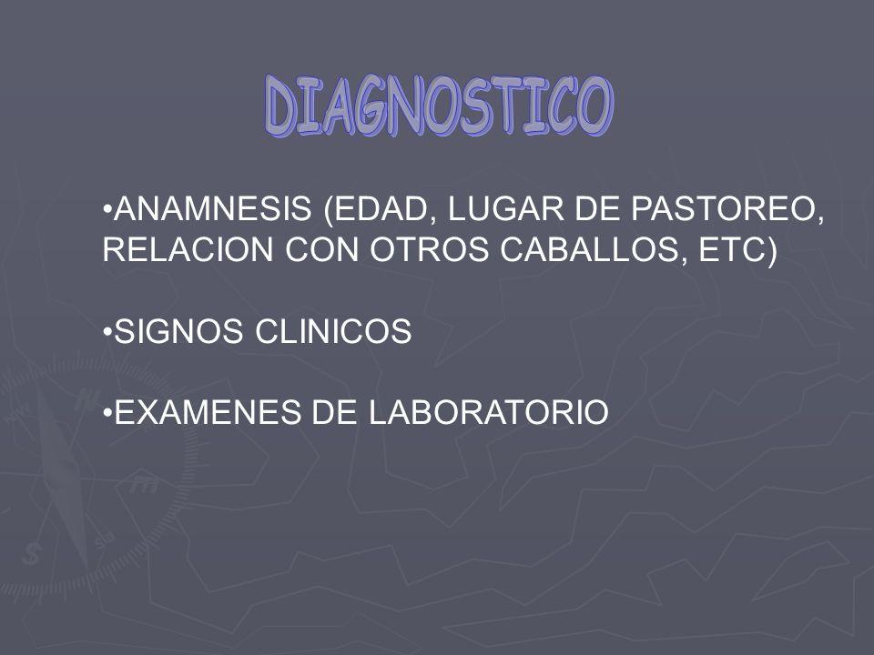 DIAGNOSTICO ANAMNESIS (EDAD, LUGAR DE PASTOREO,