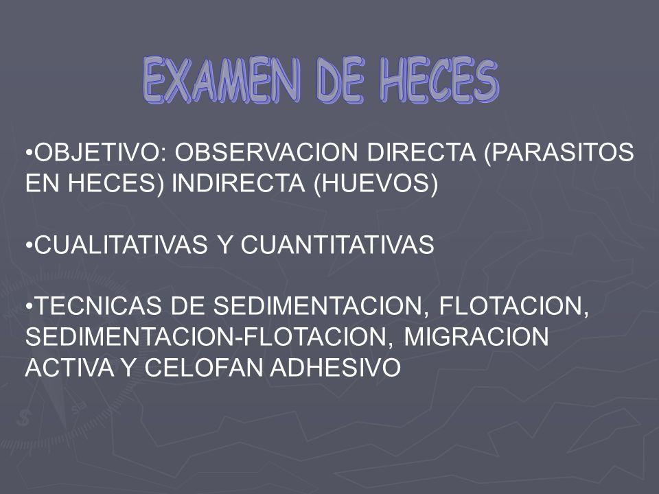 EXAMEN DE HECES OBJETIVO: OBSERVACION DIRECTA (PARASITOS