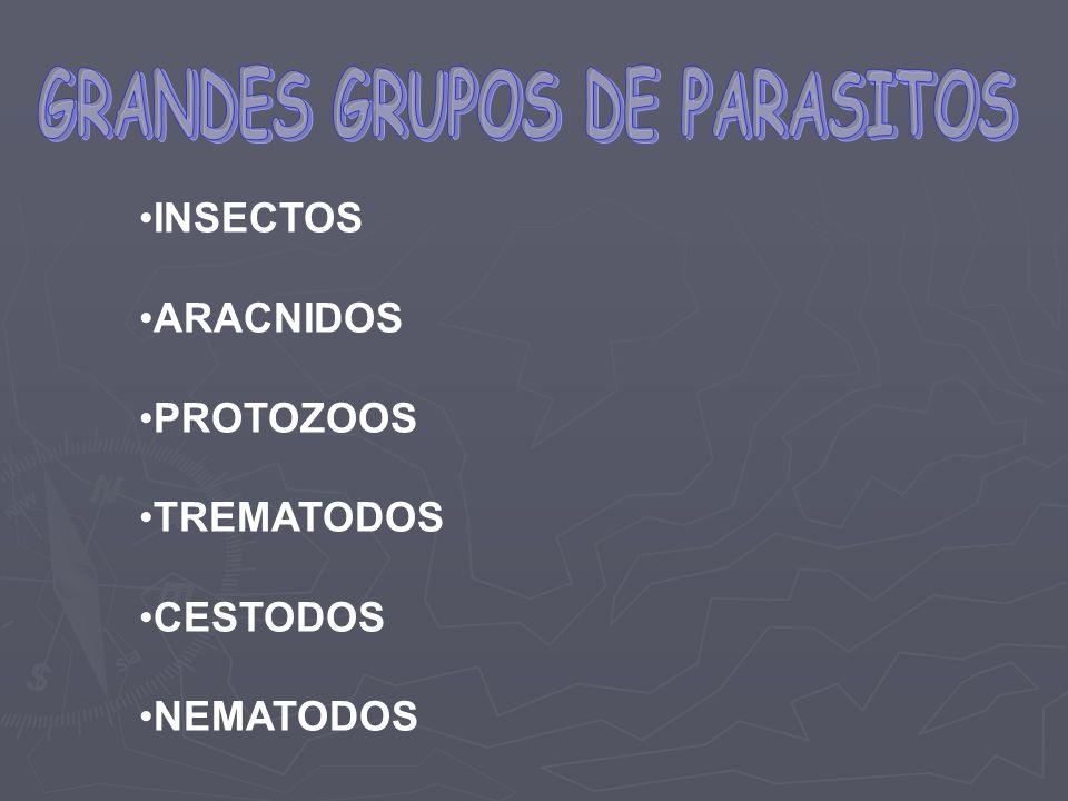 GRANDES GRUPOS DE PARASITOS