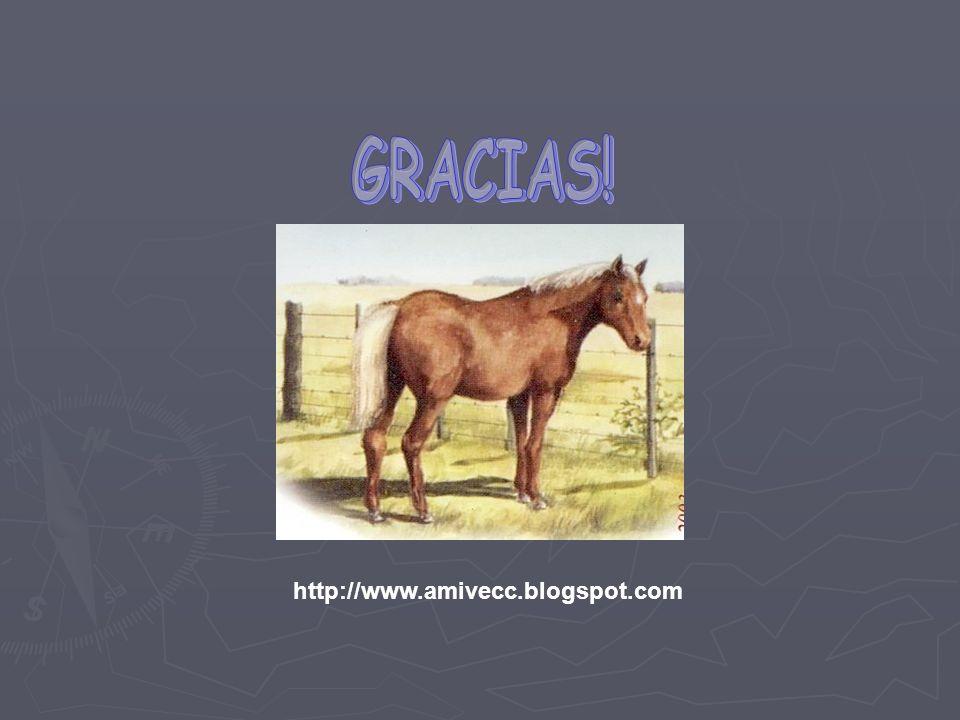 GRACIAS! http://www.amivecc.blogspot.com