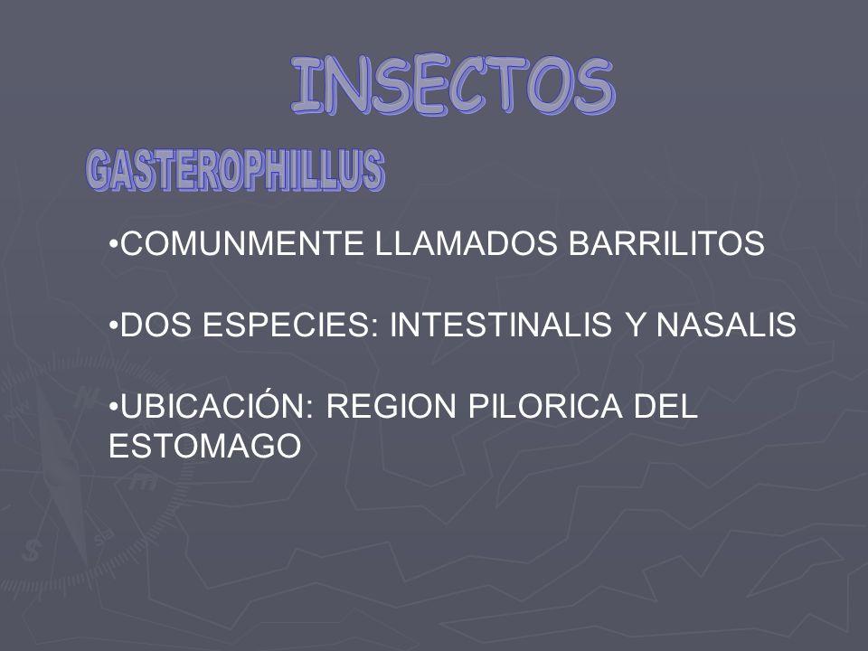 INSECTOS COMUNMENTE LLAMADOS BARRILITOS
