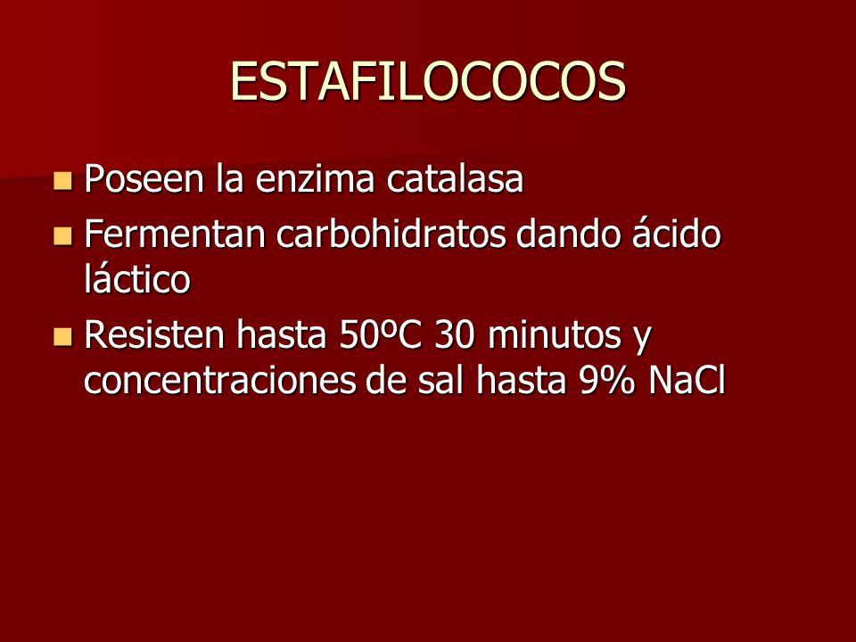 ESTAFILOCOCOS Poseen la enzima catalasa