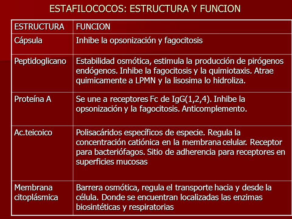ESTAFILOCOCOS: ESTRUCTURA Y FUNCION