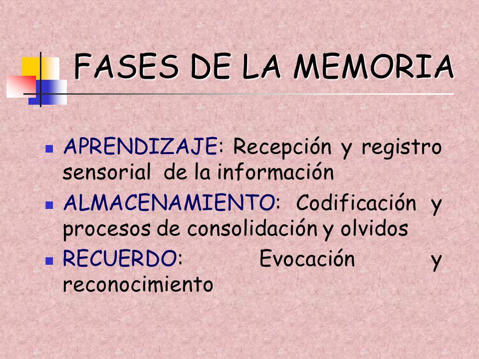 FASES DE LA MEMORIAAPRENDIZAJE: Recepción y registro sensorial de la información.