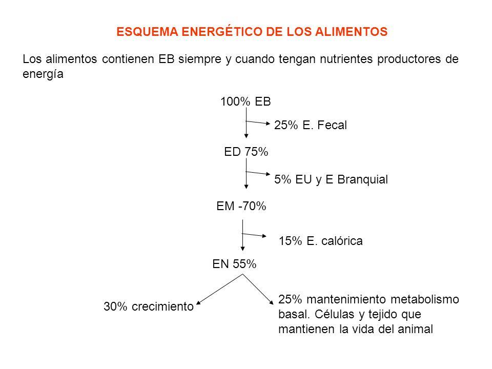 ESQUEMA ENERGÉTICO DE LOS ALIMENTOS