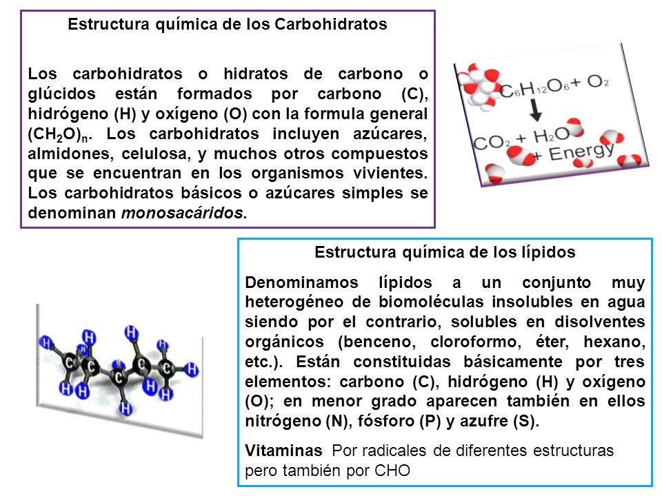 Estructura química de los Carbohidratos