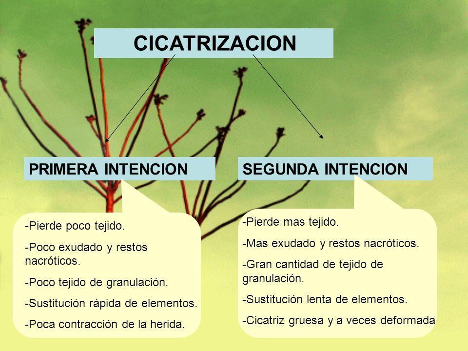 CICATRIZACION PRIMERA INTENCION SEGUNDA INTENCION Pierde mas tejido.