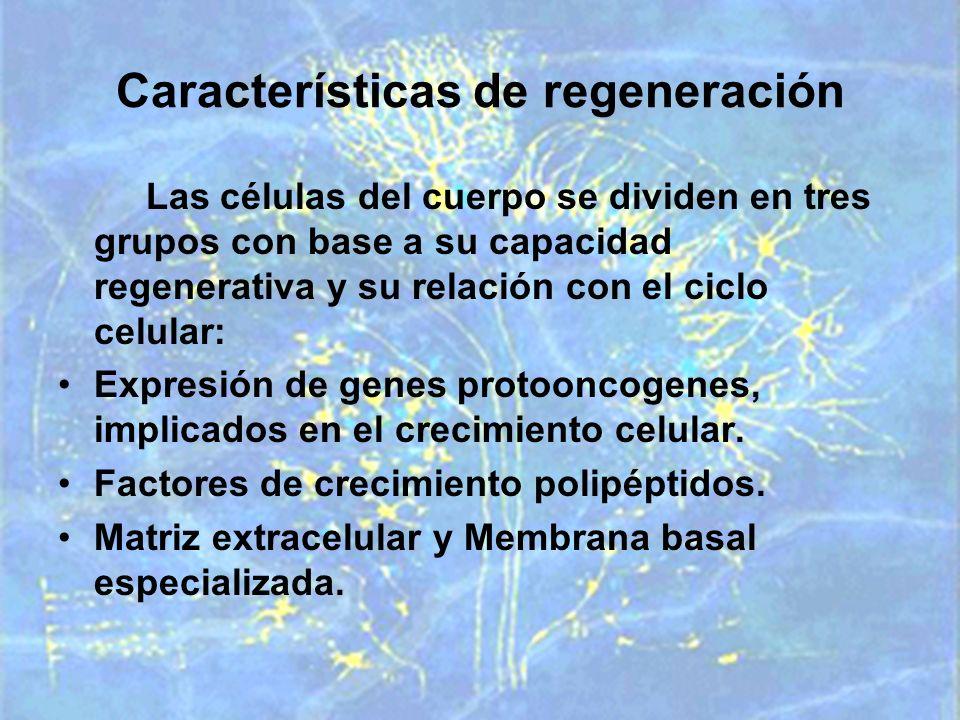 Características de regeneración