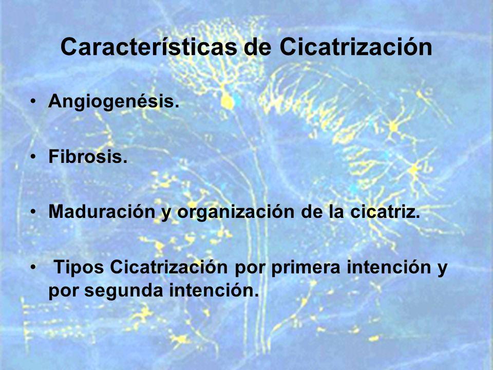 Características de Cicatrización