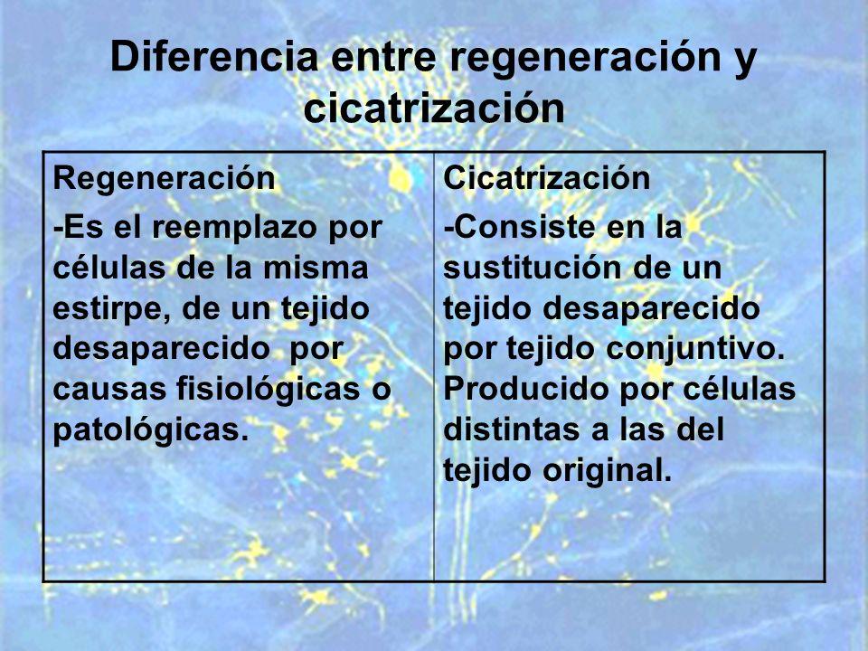 Diferencia entre regeneración y cicatrización
