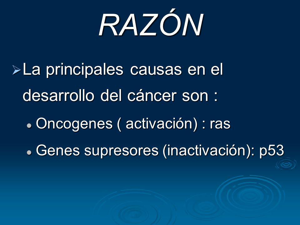 RAZÓN La principales causas en el desarrollo del cáncer son :