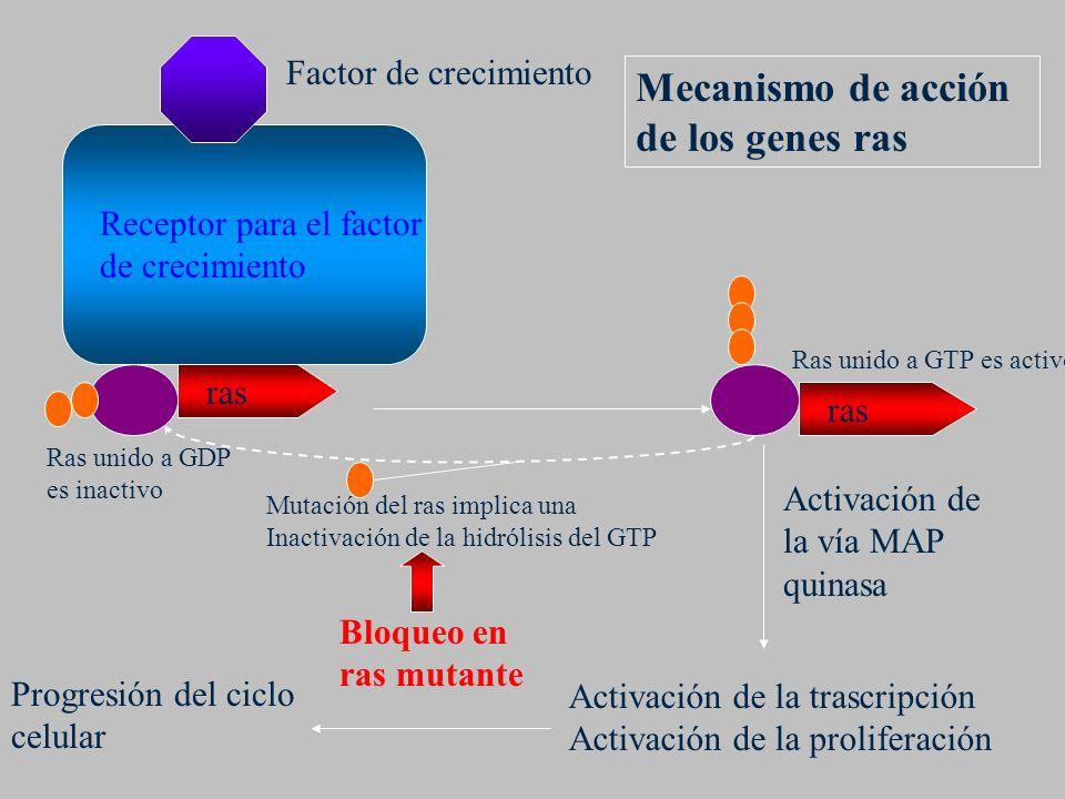 Mecanismo de acción de los genes ras