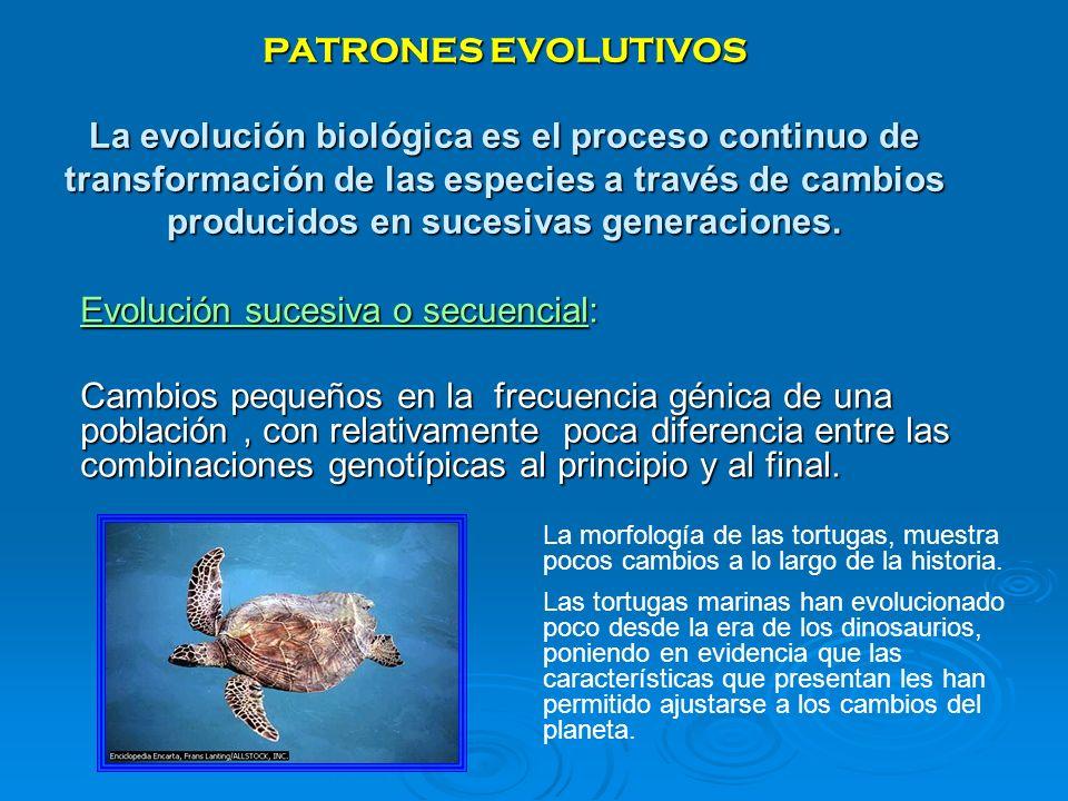 Evolución sucesiva o secuencial: