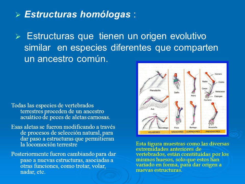 Estructuras homólogas :