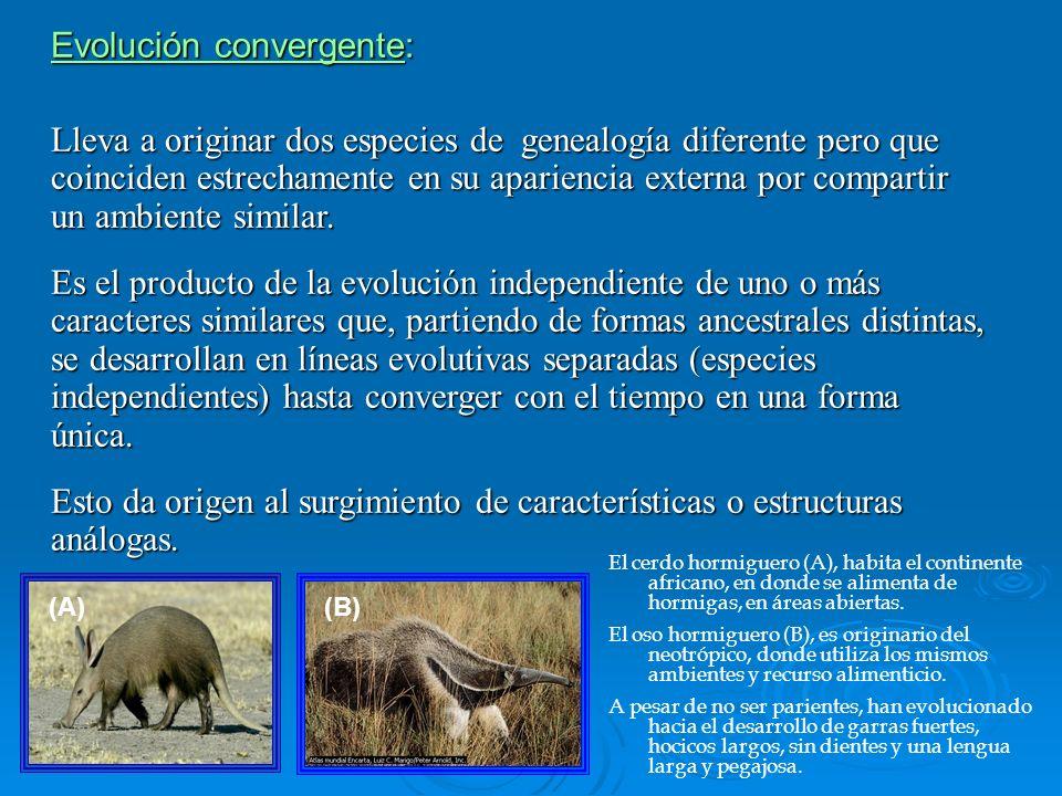 Evolución convergente: