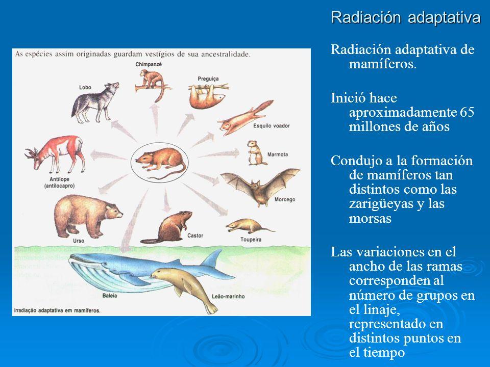 Radiación adaptativa Radiación adaptativa de mamíferos.