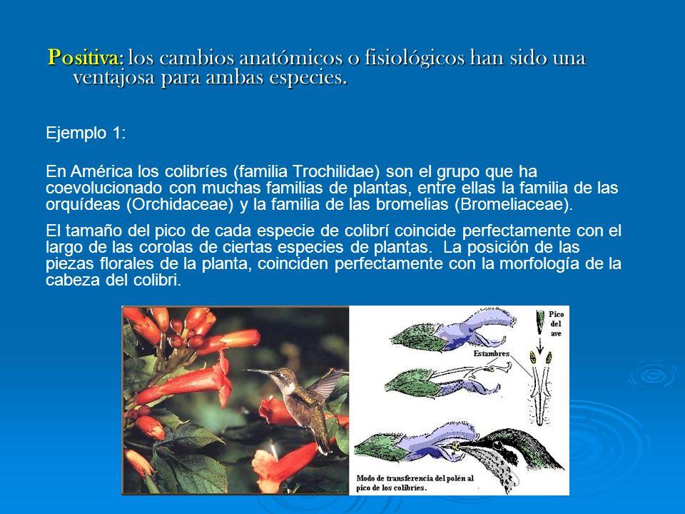 Positiva: los cambios anatómicos o fisiológicos han sido una ventajosa para ambas especies.