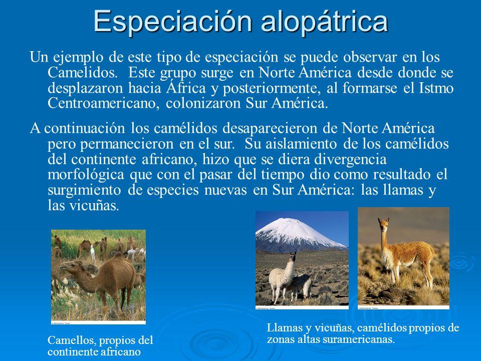 Especiación alopátrica