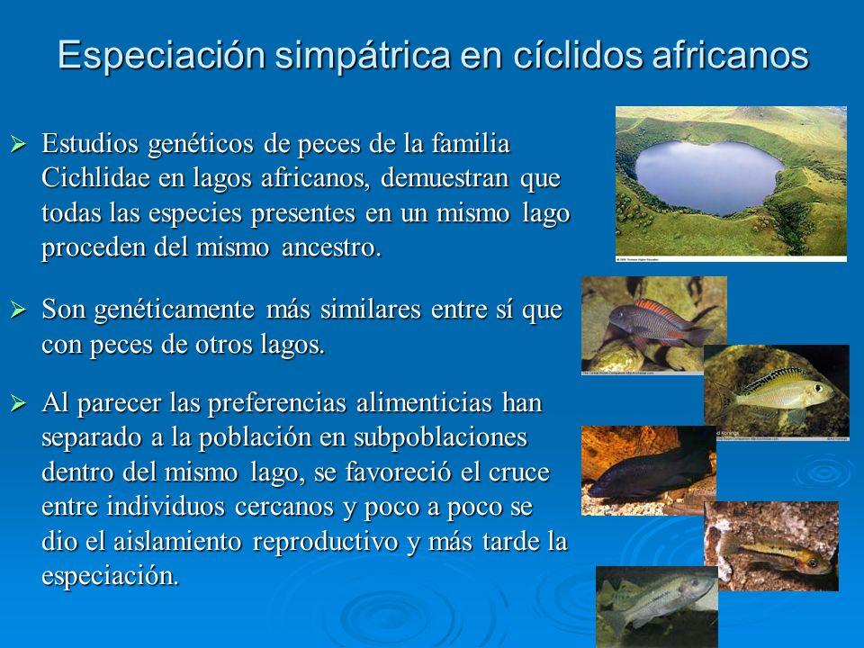 Especiación simpátrica en cíclidos africanos