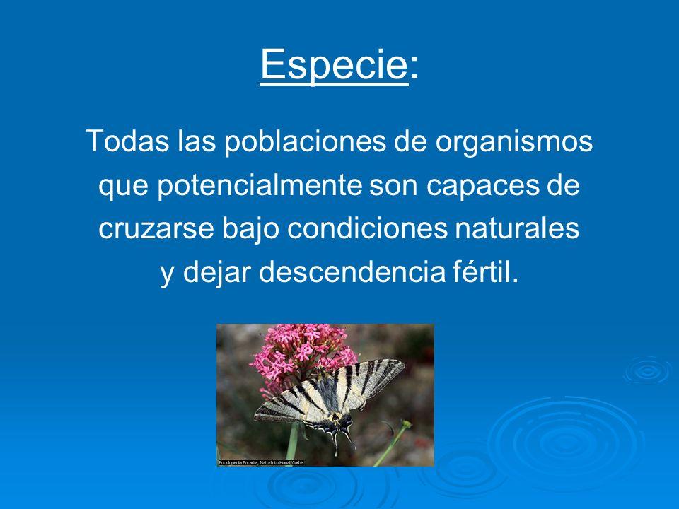 Especie: Todas las poblaciones de organismos