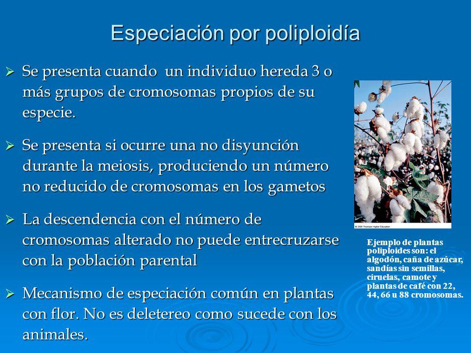 Especiación por poliploidía