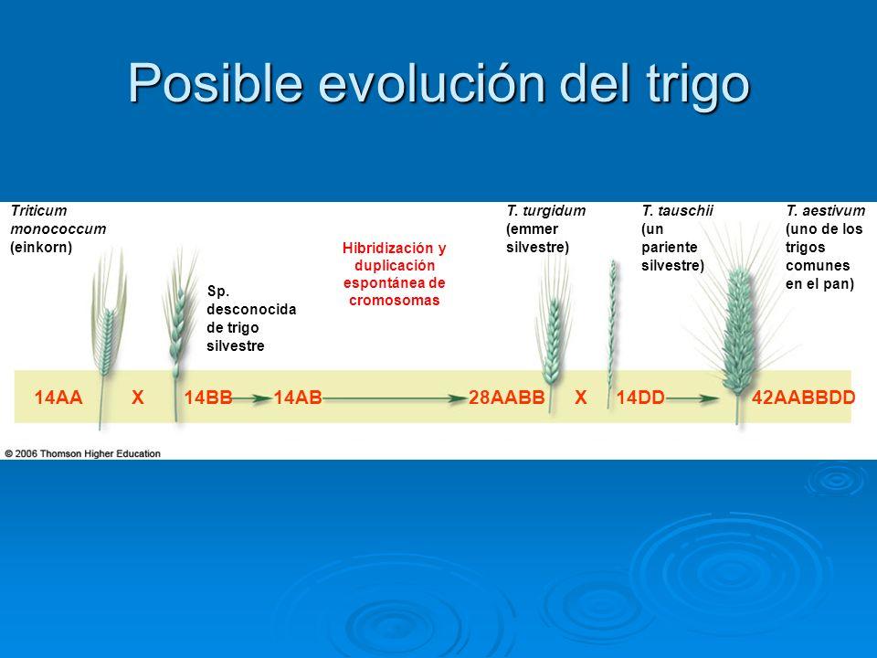 Hibridización y duplicación espontánea de cromosomas