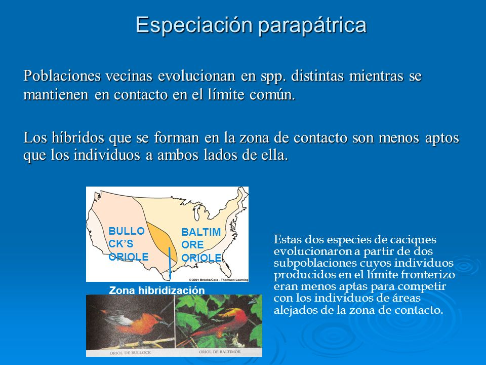 Especiación parapátrica