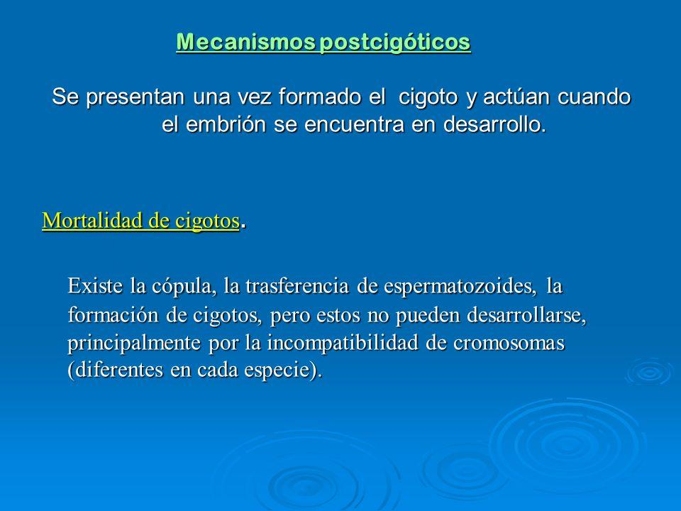 Mecanismos postcigóticos