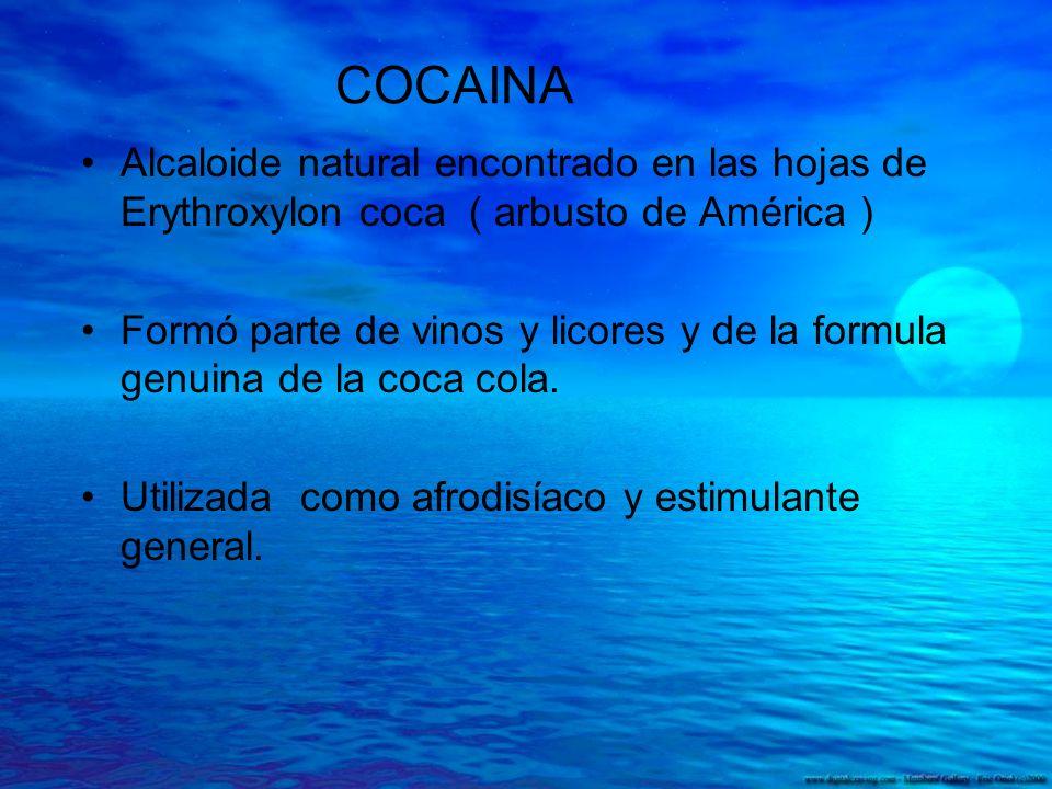 COCAINA Alcaloide natural encontrado en las hojas de Erythroxylon coca ( arbusto de América )