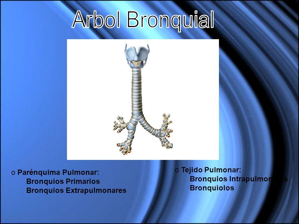 Arbol Bronquial Tejido Pulmonar: Parénquima Pulmonar: