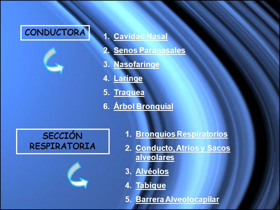 CONDUCTORA SECCIÓN RESPIRATORIA