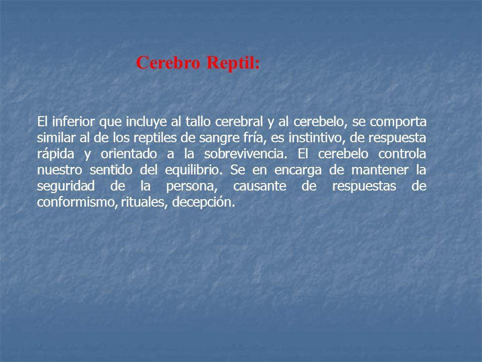 Cerebro Reptil: