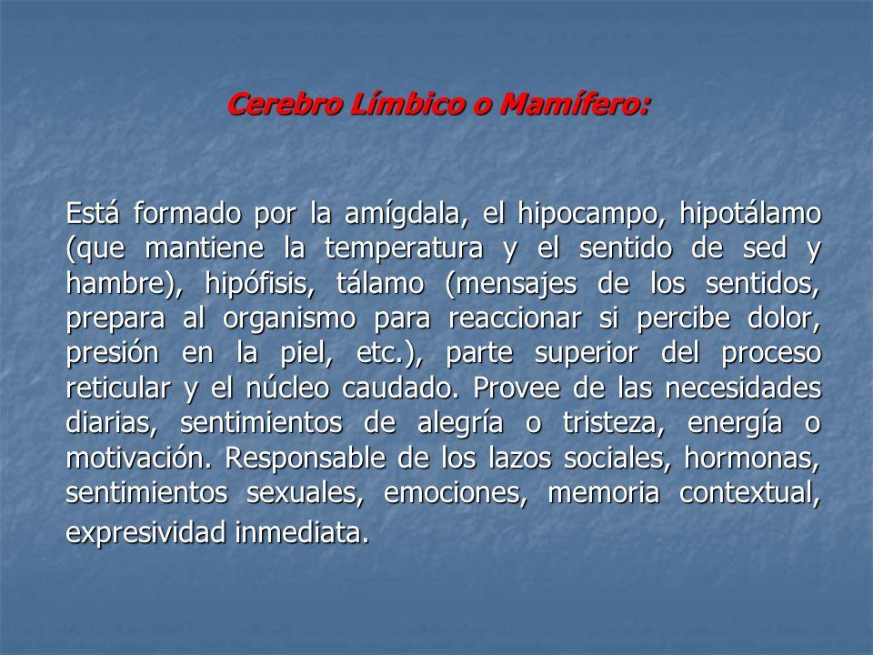 Cerebro Límbico o Mamífero: