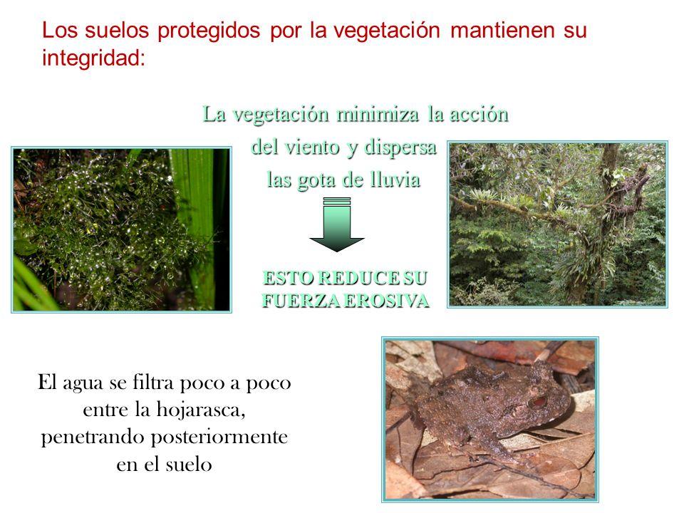 Los suelos protegidos por la vegetación mantienen su integridad: