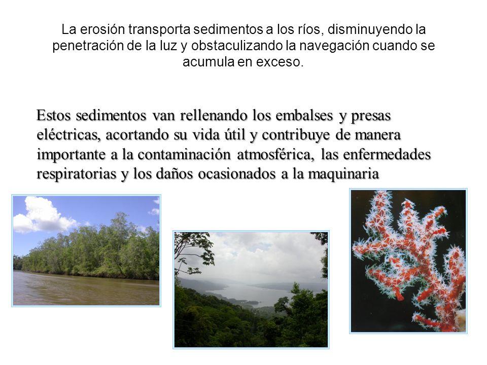 La erosión transporta sedimentos a los ríos, disminuyendo la penetración de la luz y obstaculizando la navegación cuando se acumula en exceso.