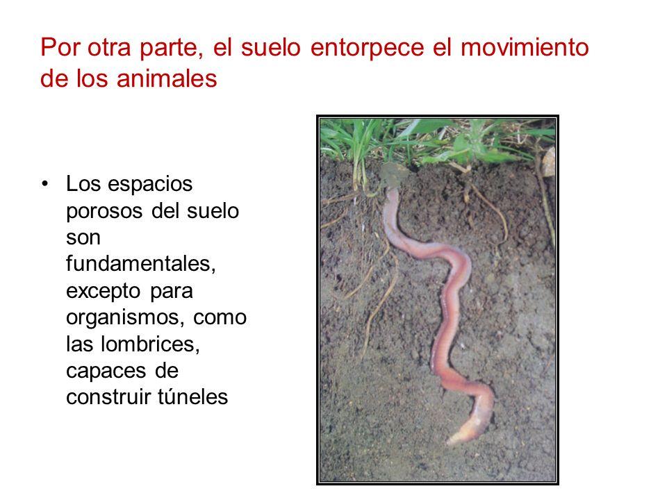 Por otra parte, el suelo entorpece el movimiento de los animales