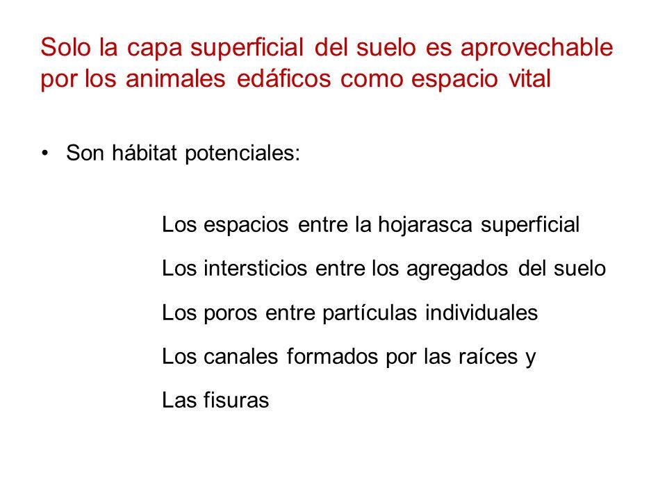 Solo la capa superficial del suelo es aprovechable por los animales edáficos como espacio vital