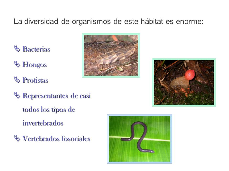 La diversidad de organismos de este hábitat es enorme:
