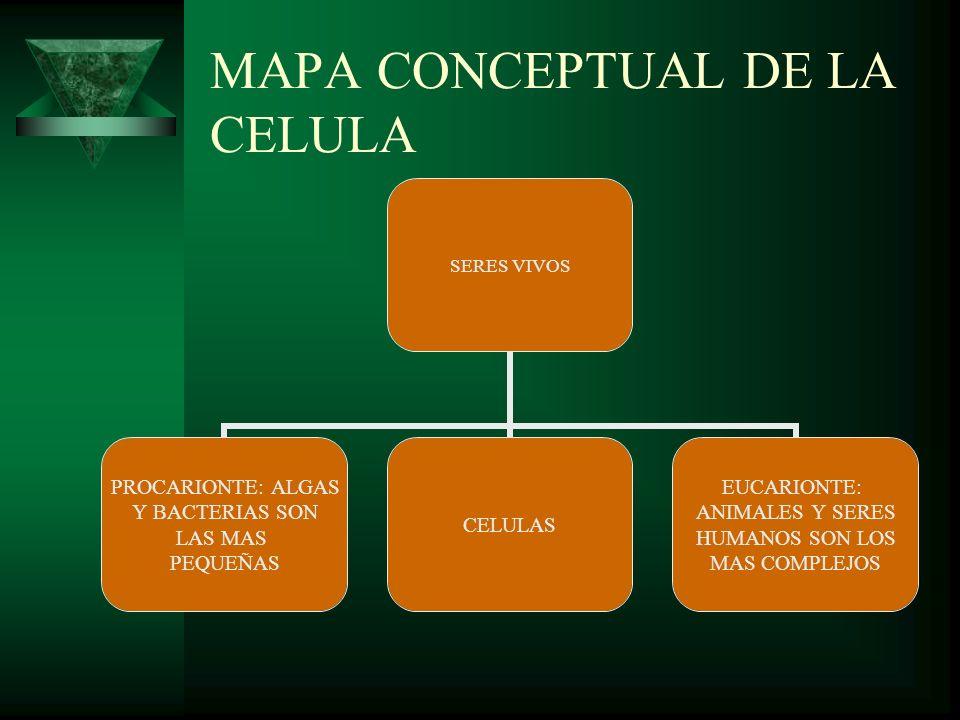 MAPA CONCEPTUAL DE LA CELULA
