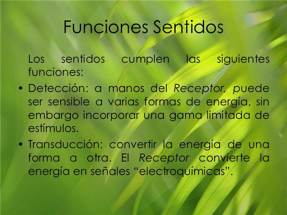 Funciones Sentidos Los sentidos cumplen las siguientes funciones: