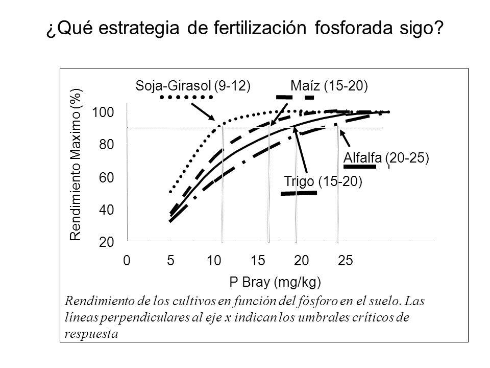 ¿Qué estrategia de fertilización fosforada sigo