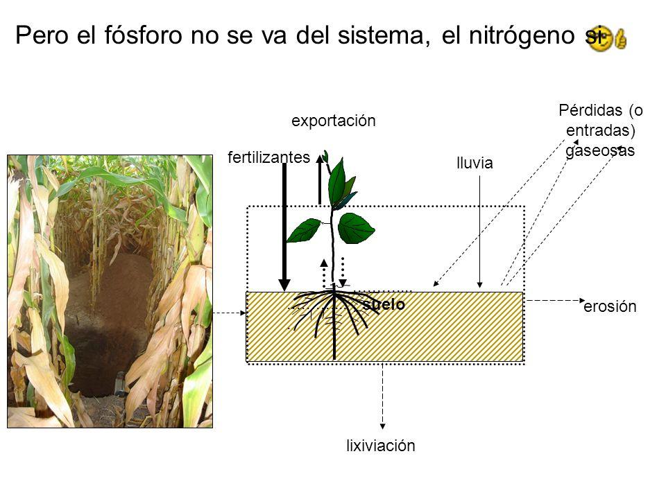 Pero el fósforo no se va del sistema, el nitrógeno si