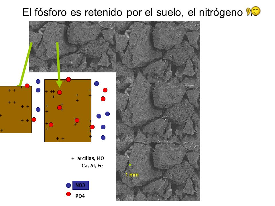 El fósforo es retenido por el suelo, el nitrógeno no